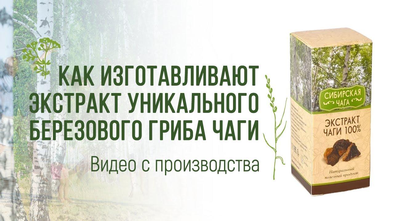 Травы Байкала производство чаги